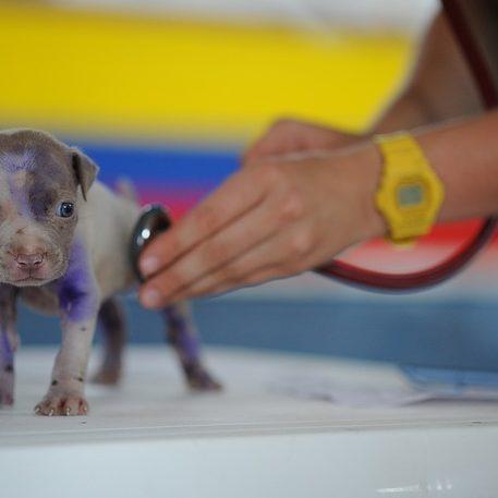 Hundegesundheit